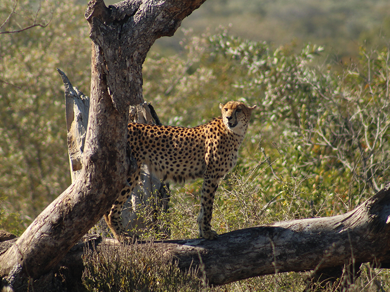kruger national park safari tours