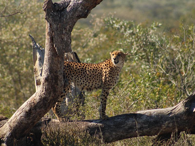kruger national park safari tours