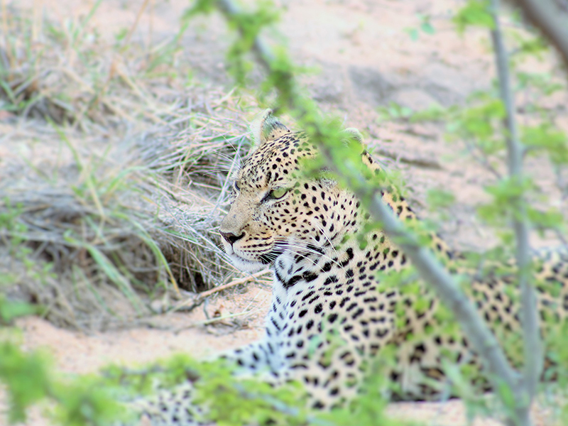 kruger national park game drives
