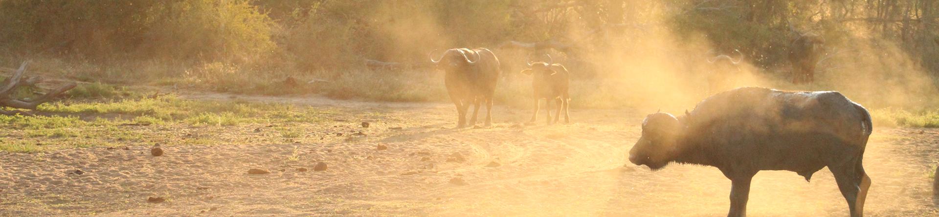 open vehicle Kruger National Park Safaris