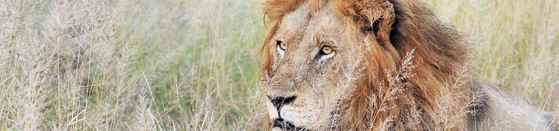 best kruger park safaris
