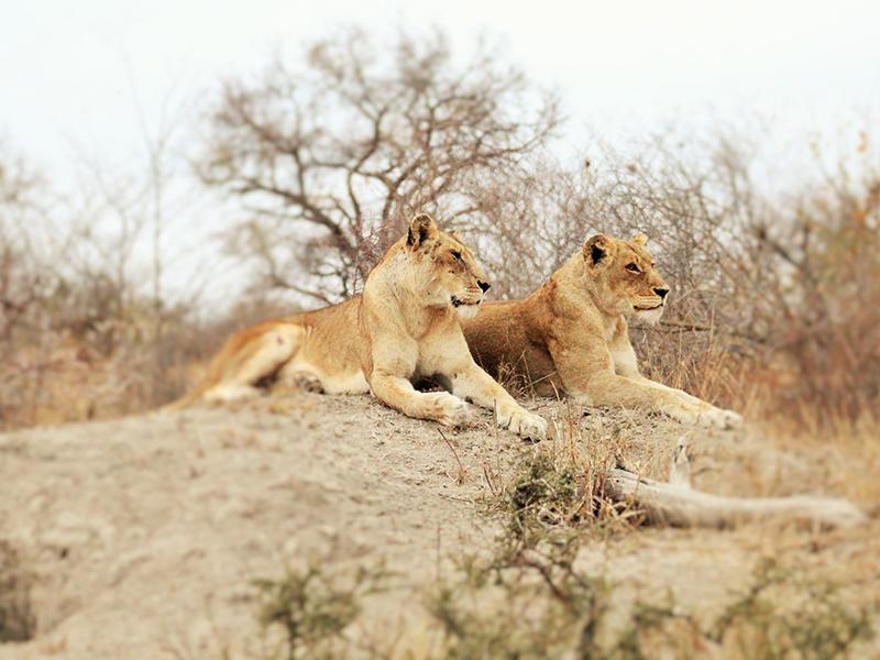 safaris to kruger park